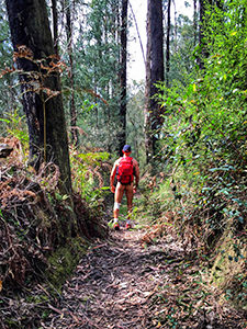 Photograph of Erik, the naked hiker, walking through the forest with nothing on but a backpack, shoes and a cap