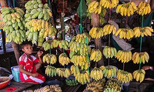 Boy in red sports dress sitting on the stand selling bananas at Phsar Krom market in Kampong Chhnang, Cambodia, photo by Ivan Kralj