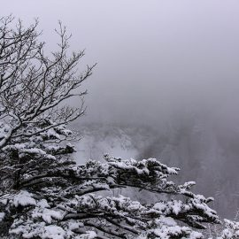 Snow-covered trees with a foggy backgorund at Kegon Falls, Japan, photo by Ivan Kralj