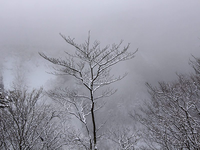Snow-covered tree with a foggy backgorund at Kegon Falls, Japan, photo by Ivan Kralj