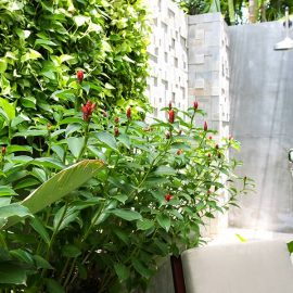 Outdoor rain shower in Junior Suite of Jaya House River Park hotel, in Siem Reap, Cambodia, photo by Ivan Kralj
