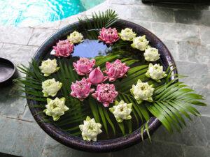 Lotus flower decoration in a bowl with fish at Rambutan Resort Phnom Penh, Cambodia, photo by Ivan Kralj