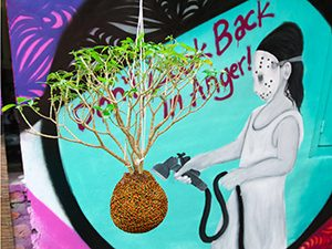 "Kokedama plant hanging in front of the graffiti saying ""Don't Look Back in Anger!"" at Abrakadabra Artbnb, one of the best hostels of Java, in Yogyakarta, Indonesia, photo by Ivan Kralj"
