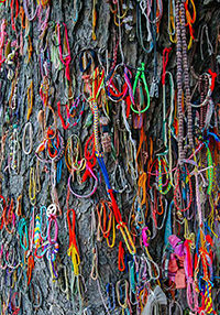 Colorful bracelets at the Killing Tree, at Killing Fields in Phnom Penh, where babies were being smashed during the Khmer Rouge regime, photo by Ivan Kralj