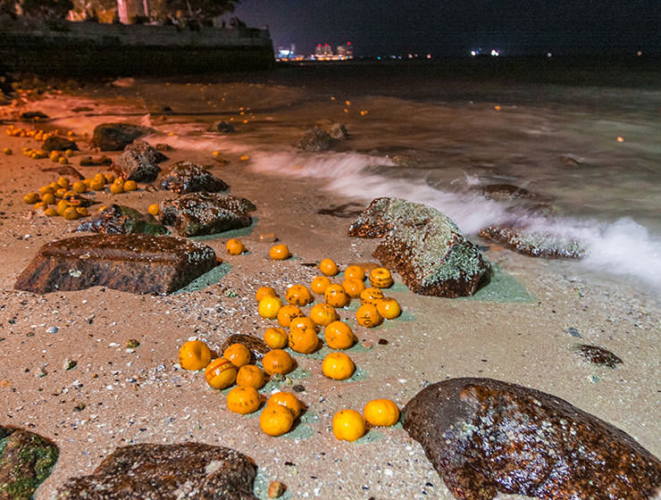 Mandarin oranges stranded on the shores of Georgetown, Penang, Malaysia, after Chinese girls threw them into the sea in hope to find Mr. Right on Chap Goh Mei, Chinese Valentine's Day, photo by Ivan Kralj