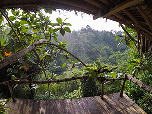 The view on lush jungle from Ijen Shelter's tree house in Banyuwangi, East Java, Indonesia, photo by Ivan Kralj