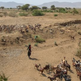 Shepherd with goats in Danakil Depression, Ethiopia, the hottest place on Earth, photo by Ivan Kralj