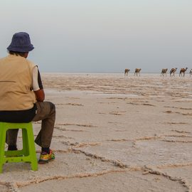 A man observing the camel caravans transporting the salt at the plains of Lake Assale, Danakil Depression, Ethiopia, the hottest place on Earth, photo by Ivan Kralj