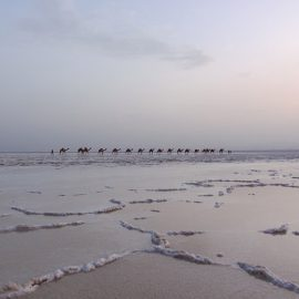 Camel caravans transporting the salt at the plains of Lake Assale, Danakil Depression, Ethiopia, the hottest place on Earth, photo by Ivan Kralj