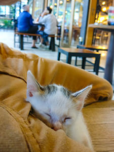 Just after she was found, Zara, the kitten, sleeping in my lap in Livingstone cake shop in Bali, photo by Ivan Kralj