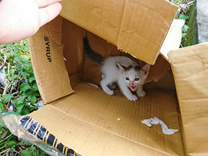 Kitten in the card box discarded by the road in Tanah Lot, Bali, photo by Ivan Kralj