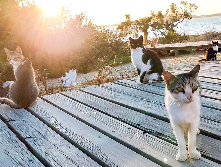 Cats resting near the beach in Naxos during sunset, photo by Ivan Kralj