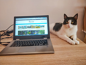 Spiro the cat laying down next to the laptop with Pipeaway webpage opened, photo by Ivan Kralj