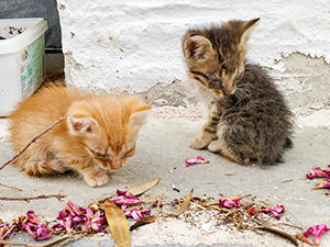 Two abandoned and blind kittens on the island of Syros in Greece, photo by Ivan Kralj