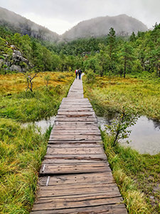 Wooden boardwalk over the swampy meadow on the Pulpit Rock trail, surrounded by lush pine forests, photo by Ivan Kralj