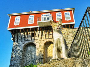 Cat in front of the Vatopedi Monastery on Mount Athos, the Holy Mountain, Greece, photo by Ivan Kralj
