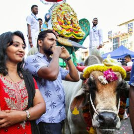 a couple of devotees with a decorated cow at Thaipusam Festival 2019 at Batu Caves, Malaysia, photo by Ivan Kralj