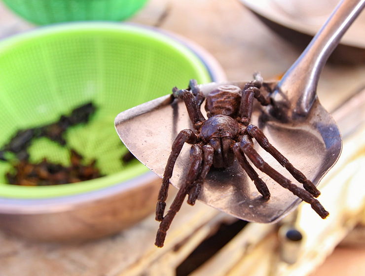Close-up of a tarantula spider at Backstreet Academy's Fear Factor Challenge cooking class in Siem Reap, Cambodia, a country where they love eating insects, photo by Ivan Kralj