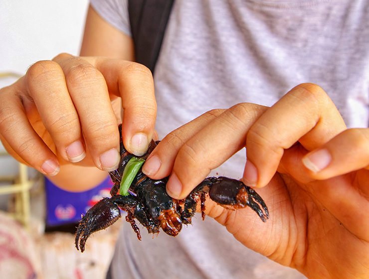 Holding a scorpion in hands at Backstreet Academy's Fear Factor Challenge, in Siem Reap, Cambodia, country where they love to eat insects, photo by Ivan Kralj