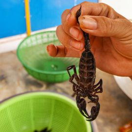 Holding a scorpion by his tail at Backstreet Academy's Fear Factor Challenge cooking class in Siem Reap, Cambodia, a country where they love eating insects, photo by Ivan Kralj