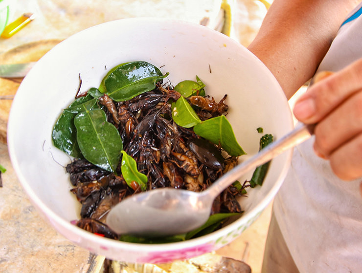 Seasoning the crickets at Backstreet Academy's Fear Factor Challenge cooking class in Siem Reap, Cambodia, a country where they love eating insects, photo by Ivan Kralj