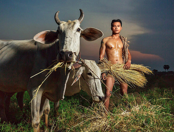 Naked and muscular gay Khmer - Cambodian peasant feeding his cows with hay on the field, photograph created for calendar Men of Cambodia 2018/2019 by Space Hair Salon and Bar