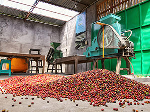 Red coffee beans on the floor in the sorting room at Munduk Moding Plantation, the only Bali resort set on the working coffee plantation, Indonesia, photo by Ivan Kralj