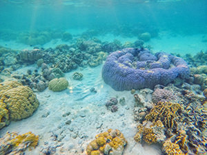 Corals of Las Islas de Coral, near CYC island, one of the stops in Coron Island Tour, island hopping tour, Palawan, Philippines, photo by Ivan Kralj