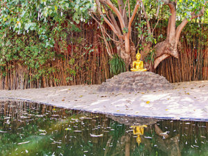 Buddha statue under a Bodhi tree, in front of the small pond at Wat Phantao, a must-see temple in Chiang Mai, Thailand, photo by Ivan Kralj