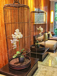 Orchid flower in a cage in the lobby of The Amala, one of the best hotels in Bali, photo by Ivan Kralj